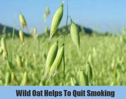 Green oats To Stop Smoking