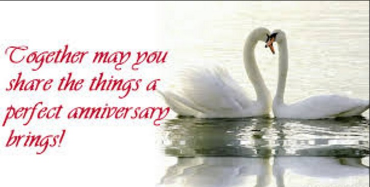 happy anniversary lovely couple ducks picture