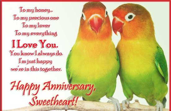 parrot couple happy anniversary with quots