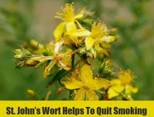 St. john's wort To Stop Smoking