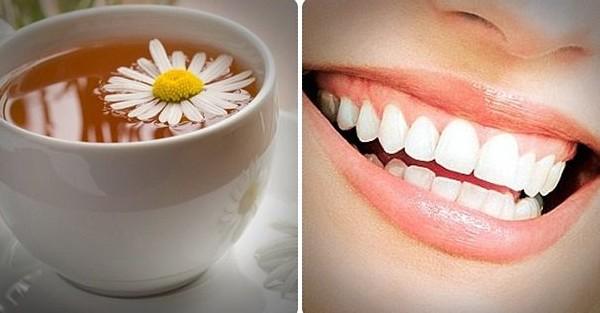 Chamomile Tea Treats Gum Disease