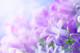 Worlds top 100 beautiful flowers images wallpaper photos free download pink beautiful flower hd wallpaper for free download mightylinksfo