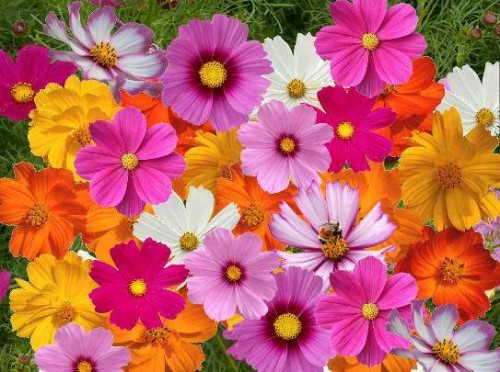 colorful flower pictures