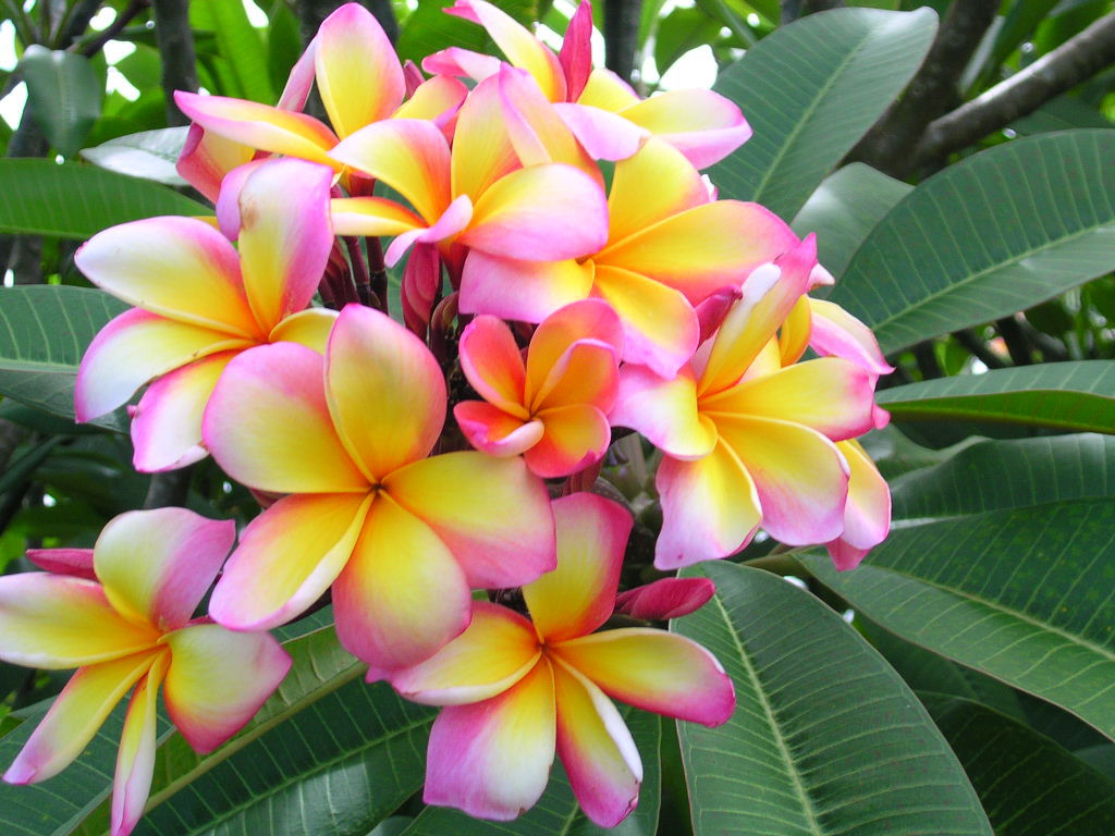 Worlds top 100 beautiful flowers images wallpaper photos free download beautiful colorful flower hd wallpaper image izmirmasajfo