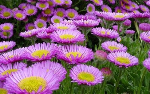 beautiful flower image