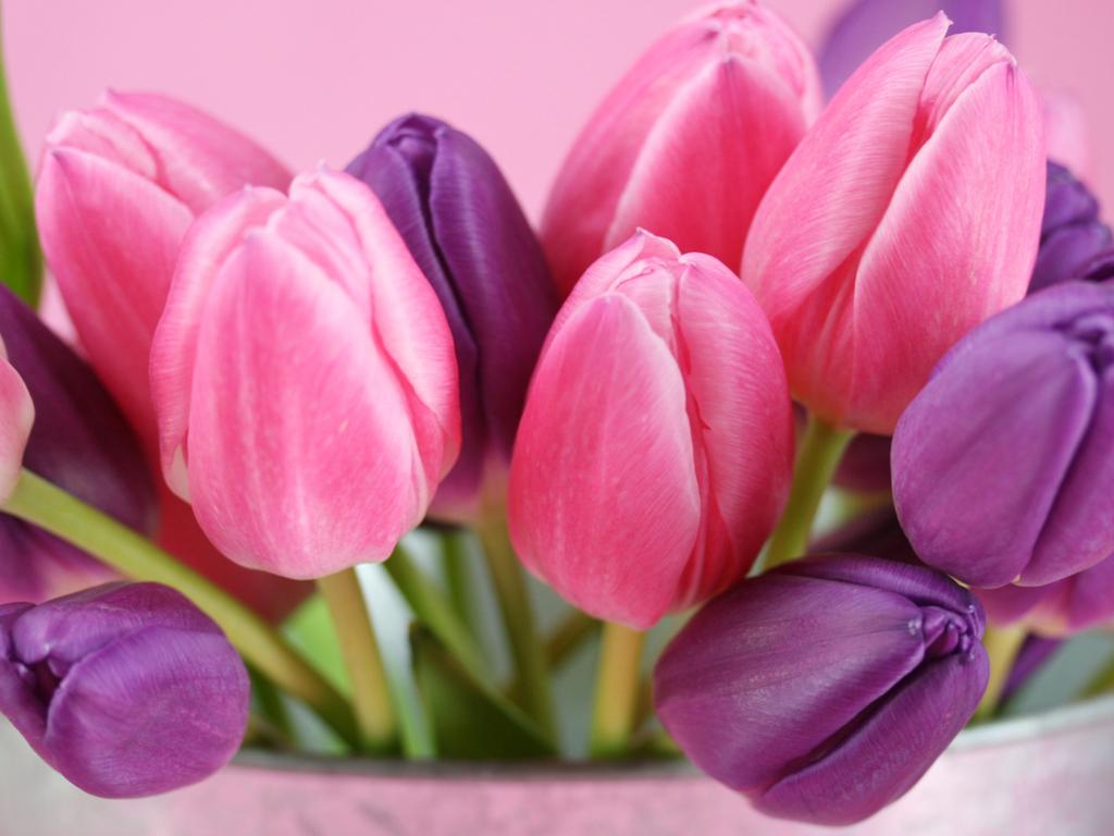 pink purple flower hd wallpaper